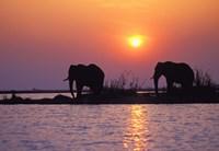 Elephants at Sunset Fine-Art Print