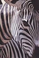 Zebra Stripes Fine-Art Print