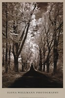 Country Road II Fine-Art Print