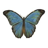 Butterfly Botanical III Fine-Art Print