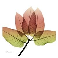 FicusBurkey Fall Fine-Art Print