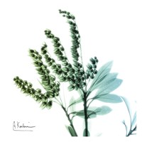 Lily of The Valley Stems Fine-Art Print