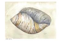 Sea Shell Neutral 1 Fine-Art Print