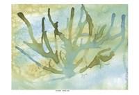 Seafoam Coral I Fine-Art Print
