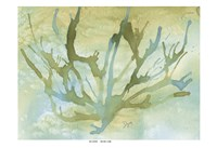 Seafoam Coral II Fine-Art Print
