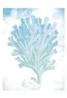 Coastal Life Fine-Art Print