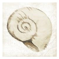 Sepia Shell Fine-Art Print