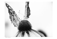 Black And White Butterflies Fine-Art Print