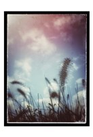 Grass Stalks With Border Fine-Art Print