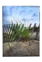 Beach Grass With Fence And Border Fine-Art Print