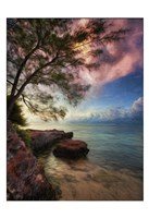 Vertical Tree And Water With Worder Fine-Art Print