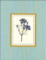 Botanical XIII Fine-Art Print