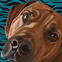 Dlynn's Dogs - Bunsen Fine-Art Print