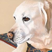 Dlynn's Dogs - Shell Fine-Art Print