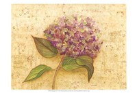 Hydrangea Love I Fine-Art Print