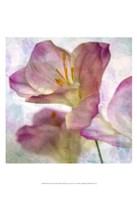 Pink Hyacinth I Fine-Art Print