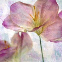Pink Hyacinth II Fine-Art Print