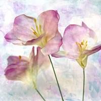 Pink Hyacinth III Fine-Art Print