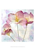Pink Hyacinth IV Fine-Art Print