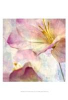 Pink Hyacinth V Fine-Art Print