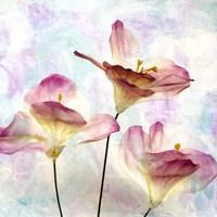 Pink Hyacinth VI Fine-Art Print