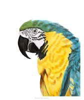 Watercolor Parrot Fine-Art Print