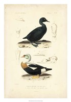 Antique Duck Study I Fine-Art Print