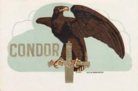 Condor Fine-Art Print