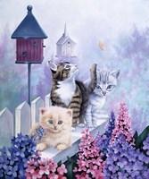Cats In Front Of The Birdfeeder Fine-Art Print