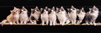 Klassical Kittens Fine-Art Print