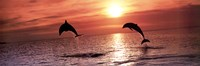 Sunset Dolphins Fine-Art Print