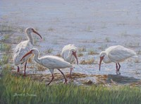 Ibis Excursion Fine-Art Print