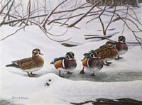 Winter Wood Ducks Fine-Art Print