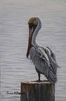 Resting Pelican Fine-Art Print