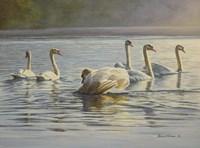 Hanover Swans Six Fine-Art Print
