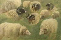 Black-Faced Ram and Sheep, 10 studies Fine-Art Print