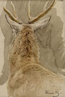 Study of a Deer Fine-Art Print