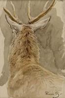 Study of a Deer Fine-Art Print