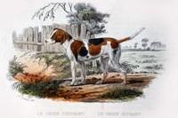 Dog I Fine-Art Print