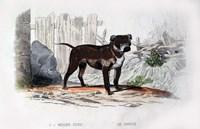 Dog IV Fine-Art Print