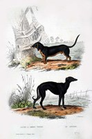 Pair of Dogs III Fine-Art Print