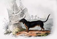 Dog V Fine-Art Print
