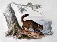 Wild Cat Fine-Art Print