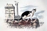 Cat on Roof Top Fine-Art Print