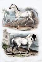 Pair of Horses Fine-Art Print