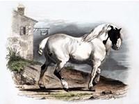 Horse II Fine-Art Print
