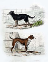 Pair of Dogs IV Fine-Art Print