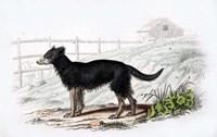 Dog VII Fine-Art Print