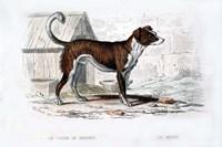 Dog VIII Fine-Art Print