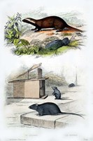 Badger and Mouse Fine-Art Print